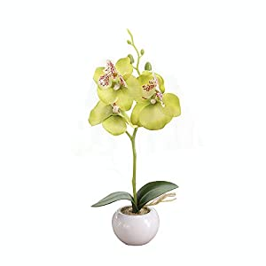 Miguor Artificial Butterfly Orchid Flower 3 Stems with Small Ceramic vase for Home Decoration,Pack of 1 51