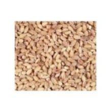 Bulk Grains, 100% Organic Hulled Barley, Bulk, 5 Lbs (Multi-Pack) by UNFI (Image #1)