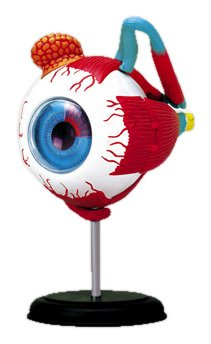 - 4D VISION Human eye anatomy model puzzle No.02 solid Skynet