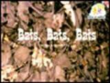 Bats, Bats, Bats, Price, 0817264493