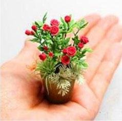 New Products 100pcs 4 Varieties Of Mixed Roses Seed Rare Bonsai Mini Rainbow Flower Seeds Beautiful Plant For DIY Home - Mini Rose Plant