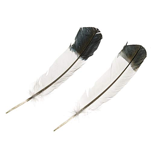 - Darice 30061248 Imitation Eagle Turkey Quills: 11 inches, 2 Pack Feathers Black and White