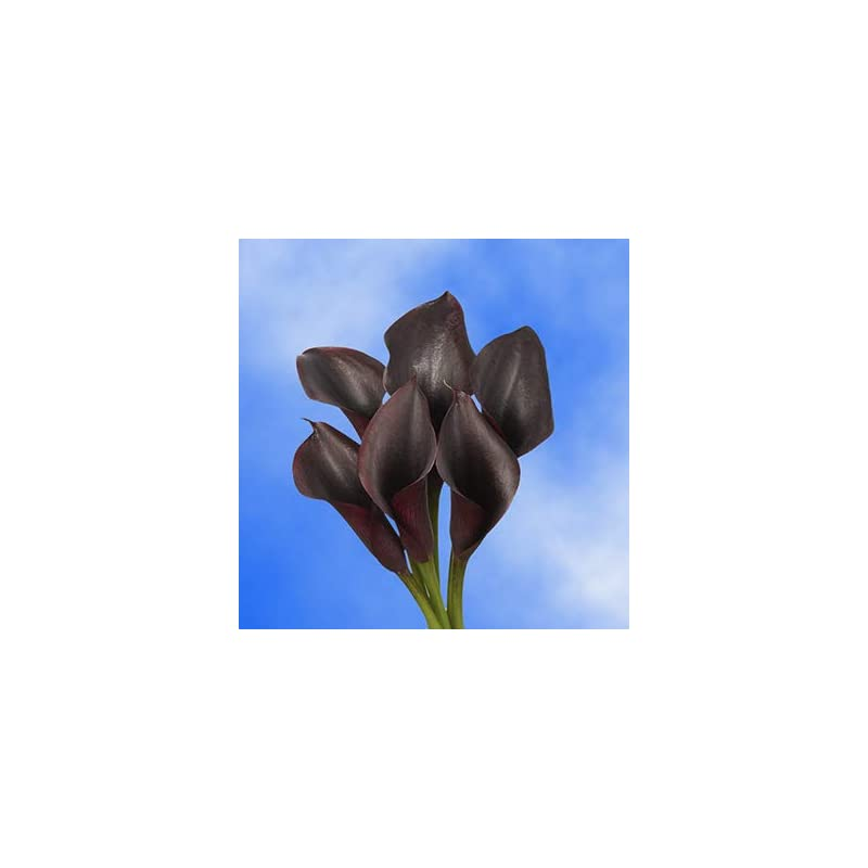 silk flower arrangements globalrose 10 stems of dark purple color calla lilies - fresh flowers for delivery