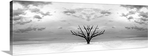 Gallery-Wrapped Canvas entitled Tree Mirror by Tony Sweet - Bay South Gallery