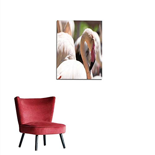 longbuyer Wallpaper Greater Flamingo (Phoenicopterus roseus) Mural 20