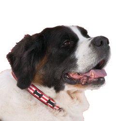 UPC 707435187237, Up Country Got Bones? Dog Collar - Medium