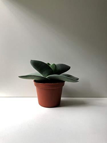 Propeller Plant, 2.5