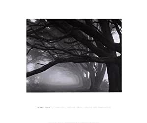 Cypresses, Skyline Drive, South San Francisco, 1996 FINEST BRAND CANVAS Print With Added Heavy BRUSHSTROKES Mark Citret 24x20