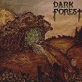 Dark Forest (12