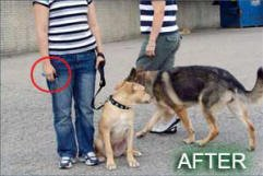 Canine Innovations Pet Convincer 2 - Air Training Tool Dogs by Canine Innovations (Image #2)