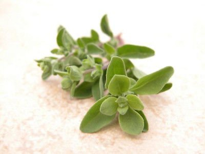 80mg Organic Marjoram Seeds ~ Hardy Perennial Herb ~ 200 Count ~ Tasty Cooking