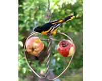 (Songbird Essentials SEHHAPPL Johnny Apple Feeder (Set of 1))