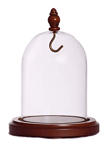 3 x 4 Pocket Watch Glass Display Dome Cloche with Hook & Wood Knob, Walnut Stained Base