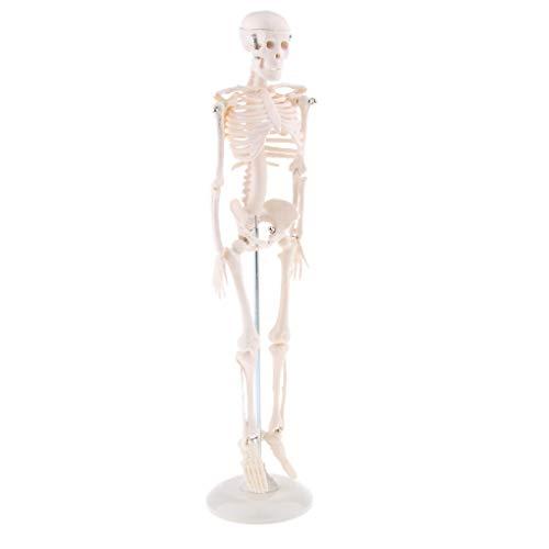Flameer Medical Standard Anatomy 45cm Human Body Skeleton Model Manikin Medical esqueleto