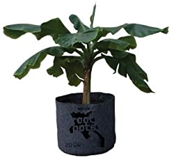 Root Pot Plant Container, 65 Gal