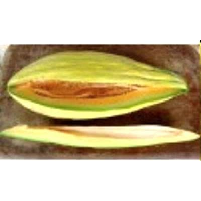 Banana Melon 30 Seeds - Sweet Banana Melon Heirloom Garden Non GMO Seeds, Organic Banana Melon Fruit Seeds, Unique Vegetable Seeds, Exotic Fruit Plants Home Garden Seeds : Garden & Outdoor