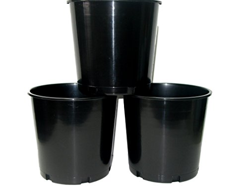 Black Offering, Donation, Ice Buckets, 176 Ounces, Pack 3