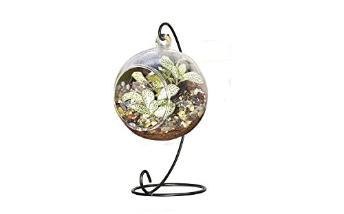10L0L Charming Clear Glass Ball Vase Air Plant Terrarium / Succulent Flowerpot Container w/ Black Metal Stand (Big)