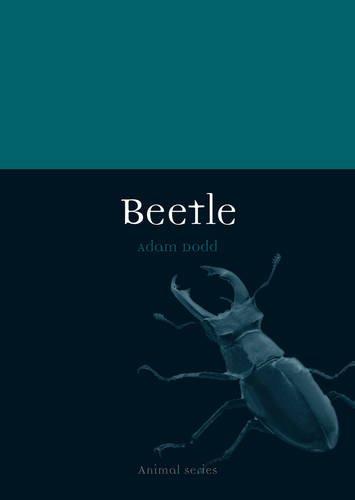 Beetle (Animal)
