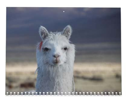 Llama Calendar - Best South America Images in Snow Capped Andes Mountains of Bolivia and Peru Photo #2