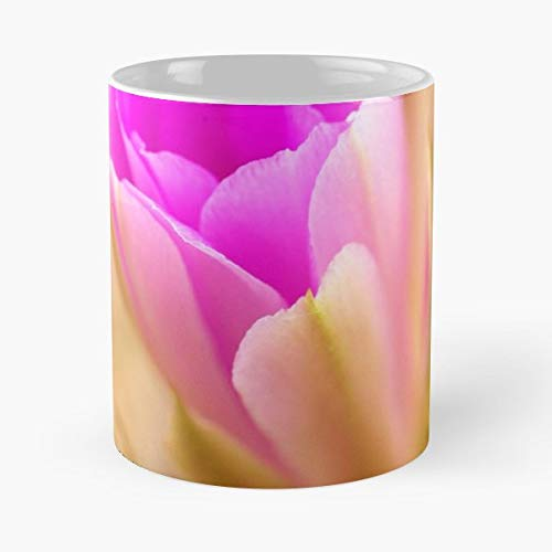 Cactus Bloom Flower Cacti Texas Wildflower Photography Ecosystem Habitat Native Plant Nature - 11 Oz Coffee Mugs Ceramic The Best Gift For Holidays, Item Use Daily