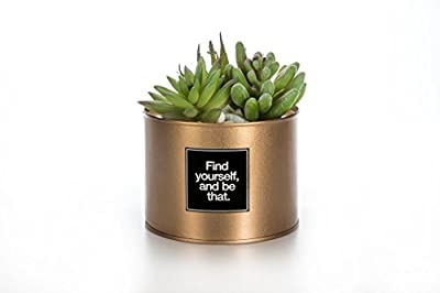 OPPS Mini Artificial Plants Plastic Succulent Cactus Green Grass With Special Can Pot Design For Home Décor
