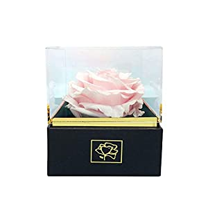 Eternal Rose/Preserved Rose/Long Lasting Rose XXL (4 inches) - Clear Acrylic Designer Giftbox - Several Colors Available 33