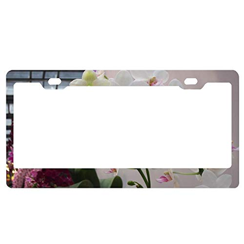 Delicate Orchids License Plate Frame for Women, US Car License Plate Frame, License Plate Holder Screw Caps 2 Holes ()