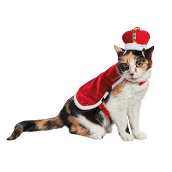 Petco Halloween King For A Day Cat Costume, One Size Fits Most