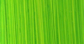 michael-harding-oil-colour-60ml-bright-green-lake