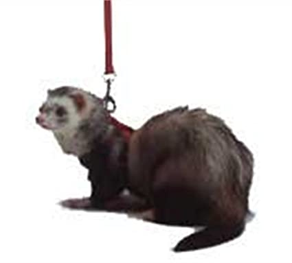 Amazon.com : Marshall Ferret Harness and Lead, Red : Pet Harnesses