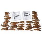 Nasco Crayfish Classroom Pack Special Lab Specimen - LS03720