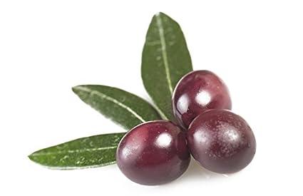 Amazon.com: taggiasca Italiano Olea europaea Olivo semillas ...