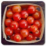 Cherry Tomato Sugar