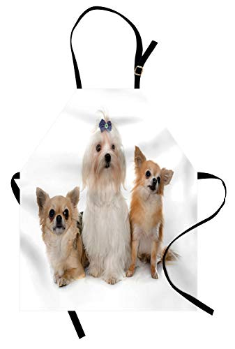 Ambesonne Puppy Apron, Chihuahua and Maltese Breed Dogs Look Same Direction on Plain Backdrop, Unisex Kitchen Bib Apron with Adjustable Neck for Cooking Baking Gardening, Pale Brown Pale Tan White