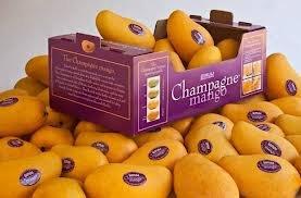 fresh-champagne-mangoes-golden-atulfo-5-pounds