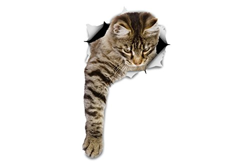 (Winston & Bear 3D Cat Stickers - 2 Pack - Reaching Tabby Cat Stickers for Wall, Fridge, Toilet and More - Retail Packaged Tabby Cat Decals)