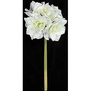28 Inch Amaryllis Stem - White Autograph Foliages 77
