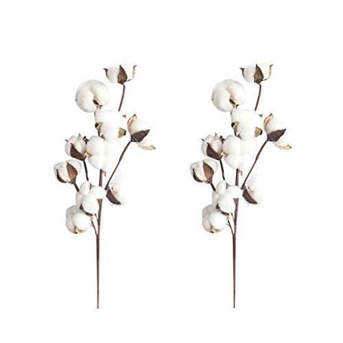 (shamrock58 2Pcs 21 inch Naturally Dried Cotton Stems Farmhouse Style Artificial Flower Fill Home Decoration (White))