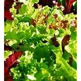 IDEA HIGH Lettuce - Mixed Salad Leaves - 500 Seeds