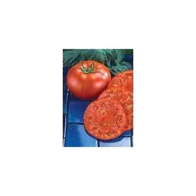 Tomato Beefmaster seeds : Tomato Plants : Garden & Outdoor