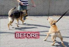 Canine Innovations Pet Convincer 2 - Air Training Tool Dogs by Canine Innovations (Image #1)
