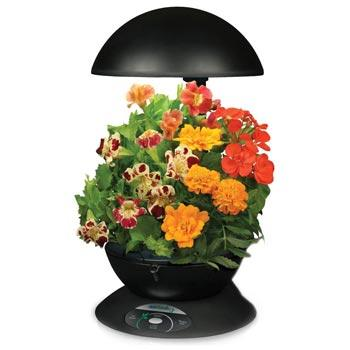 Amazoncom Miracle Gro AeroGarden 3 Pod Indoor Garden with