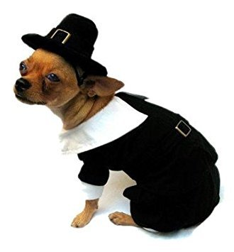 Puppe Love Size 6 Pilgrim Boy Costume for Dogs fits 16