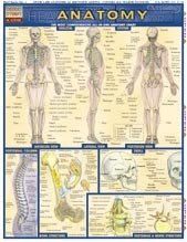 Anatomy Quick Study Guide by BarCharts: Science Lab Biology ...