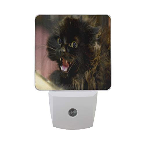 Night Light Feral Life for Cats Night Lamp LED Sensor Auto on/Off Led Plug in Wall Lights 2 Pack