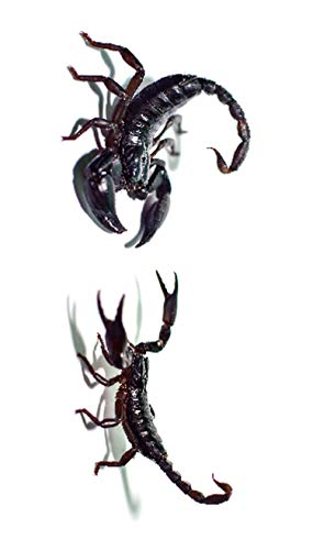 3D Spider Tatoo Scorpion Temporary Tattoo Stickers for