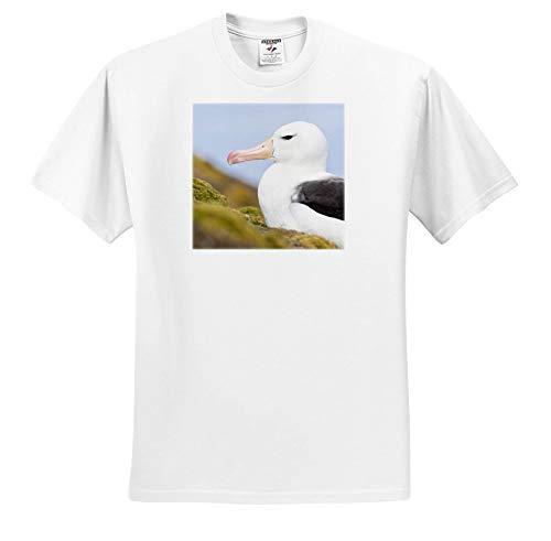 3dRose Danita Delimont - Birds - Black-Browed Albatross or Mollymawk. Falkland Islands. - White Infant Lap-Shoulder Tee (6M) (ts_314367_66) ()