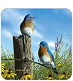Coasters Set of Four - Twin Bluebirds - Hautman Brothers & Legacy