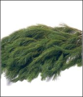 FRESH DOUGLAS FIR AND PINE BOUGHS - 5 POUND (Evergreen Branches)